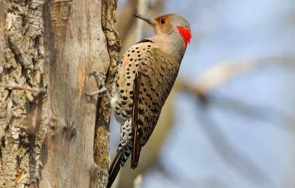 Picture tree, bird, beak, woodpecker, tail