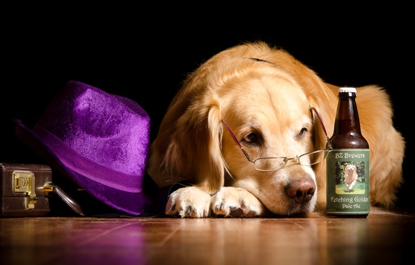 Picture hat, glasses, bottle, lies, on the floor, suitcase, Retriever, humor