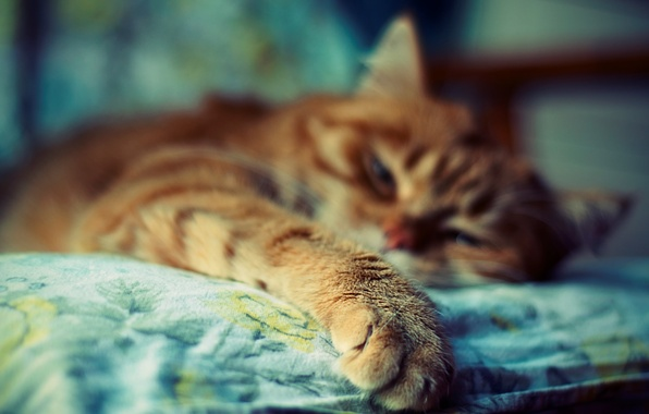 Picture cat, color, photo, background, Wallpaper, bright, paws, blur, red