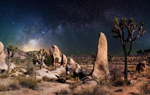 Picture the sky, grass, stars, landscape, night, stones, desert, plants