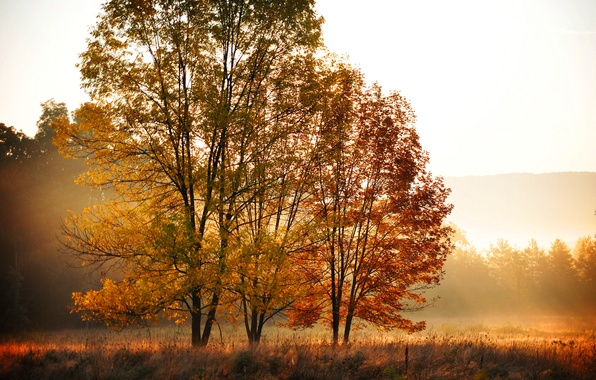 Picture field, autumn, forest, leaves, trees, nature, morning, yellow, orange