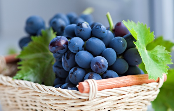 Picture leaves, berries, basket, grapes, basket, bunches