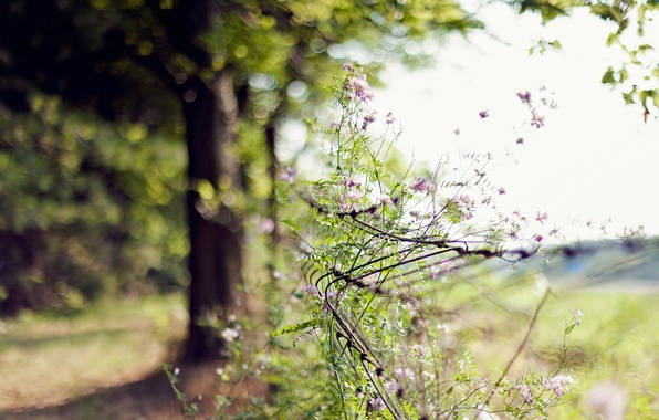 Picture summer, flowers, nature, tree, mesh, focus, fence, blur, day, bokeh