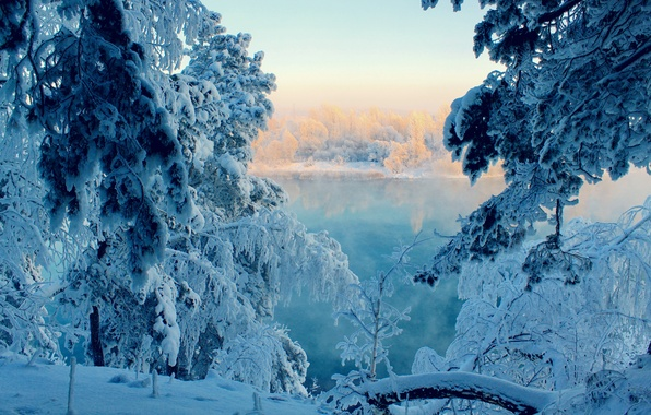 Picture winter, forest, snow, tale