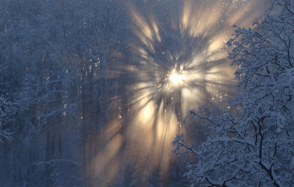 Picture winter, snow, sun, latvia