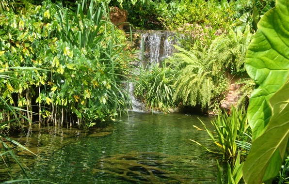 Picture greens, grass, leaves, pond, waterfall, garden, Singapore, the bushes, Botanic Gardens