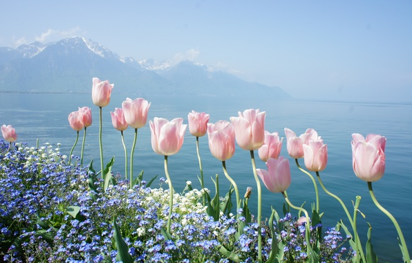 Picture water, flowers, mountains, lake, tenderness, spring, tulips, forget-me-nots, Geneva