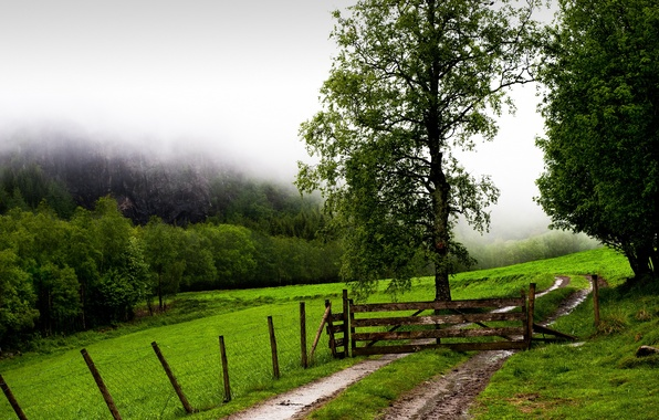 Picture field, fog, the fence, gate