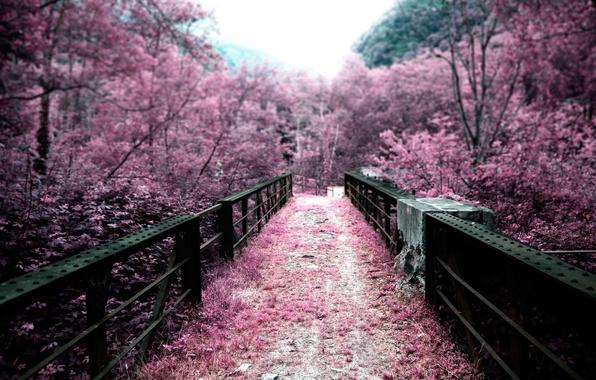 Picture trees, bridge, nature, pink, color, Japan