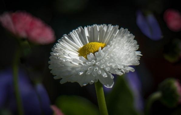 Picture flower, petals, garden, stem, flowerbed