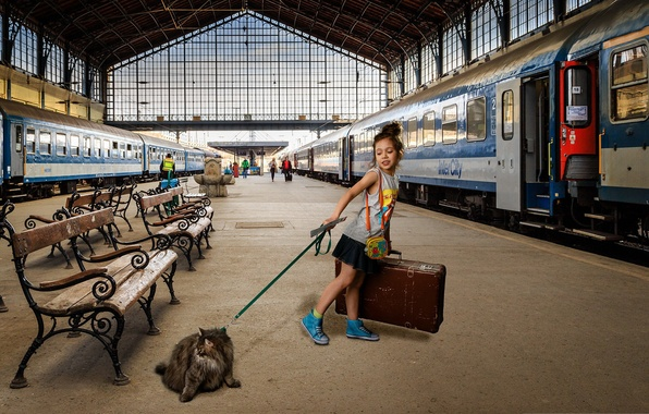 Picture cat, train, cars, the platform, girl, suitcase