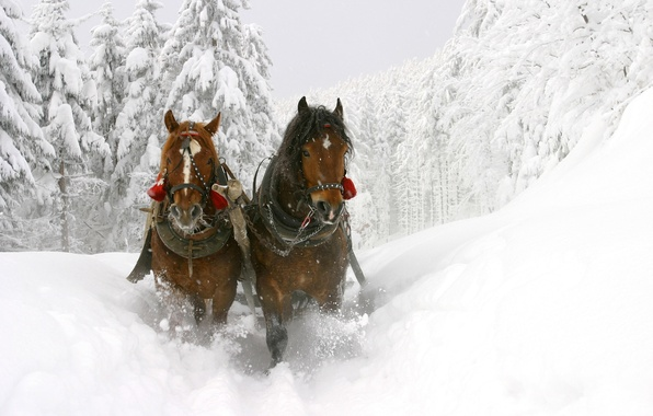 Picture winter, snow, trees, horse, the snow, sleigh, beautiful, deep, Winter sledge