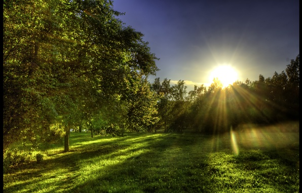 Picture greens, forest, grass, the sun, rays, glade, spring, morning