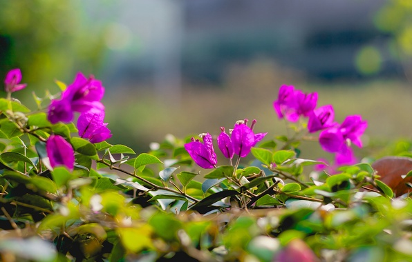 Picture leaves, flowers, branches, pink