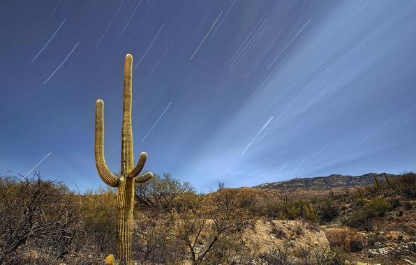 Picture the sky, stars, night, hills, desert, cactus, USA, Arizona, Tucson