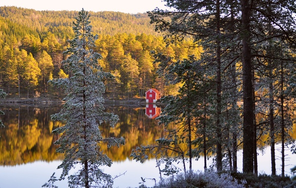 Picture autumn, forest, trees, reflection, river, shore, Norway, house, forest, needles, autumn, Norway