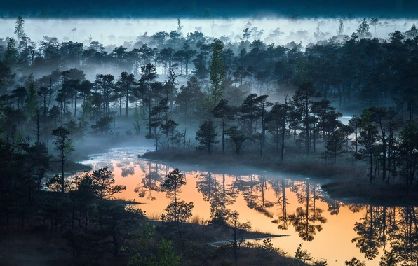 Picture forest, the sky, nature, fog, lake, river, forest