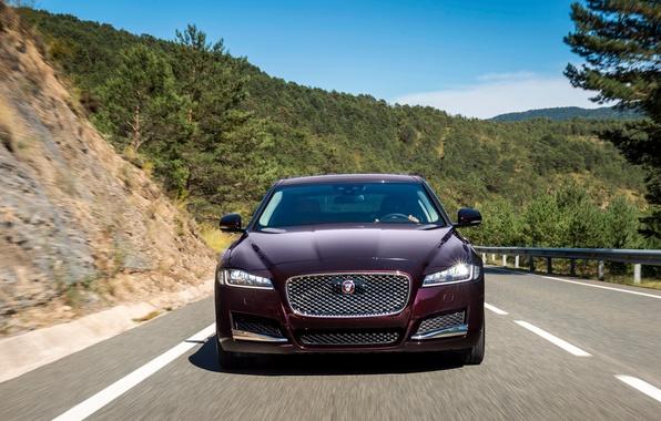 Picture Jaguar, Jaguar, Prestige, 2015