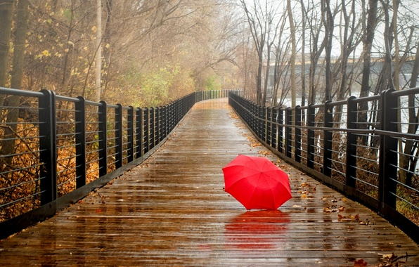 Picture autumn, forest, leaves, water, trees, bridge, nature, Park, river, rain, view, umbrella, walk, forest, river, ...
