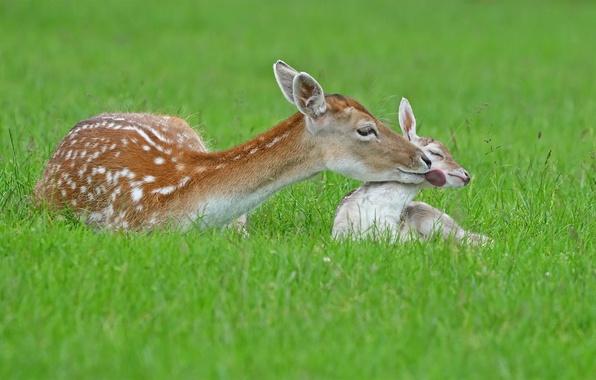 Photo wallpaper summer, nature, deer
