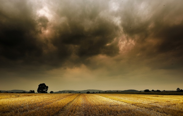 Picture field, trees, mountains, storm, horizon, storm, trees, field, mountain, horizon, farm, farm
