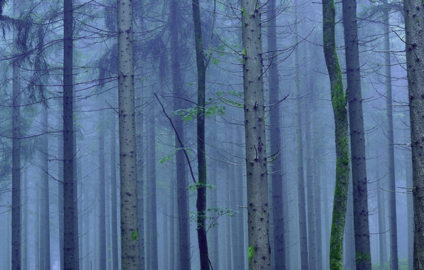 Photo wallpaper fog, trees, trunk, forest