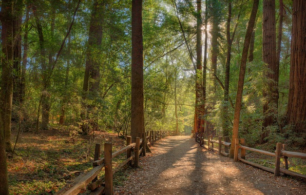 Picture road, forest, the sun, rays, fence