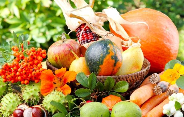 Picture greens, autumn, flowers, nature, apples, Mac, corn, pumpkin, basket, vegetables, pear, carrots, Rowan, chestnuts