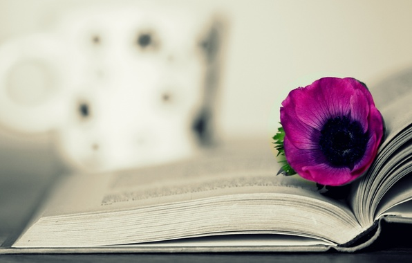 Picture flower, background, pink, Wallpaper, book, wallpaper, flower, different, owner, widescreen, background, book, full screen, HD …
