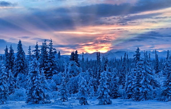Picture winter, snow, trees, mountains, Alaska, Alaska