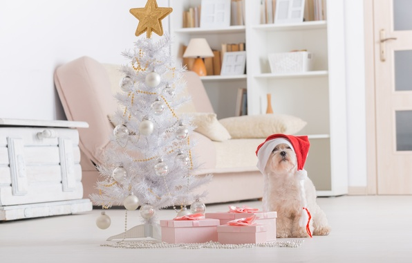 Picture holiday, new year, Christmas, dog, christmas, new year