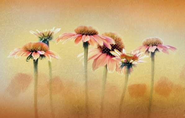 Picture flowers, background, color, texture
