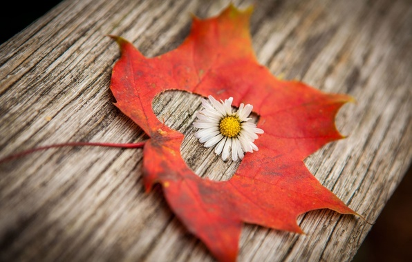 Picture flower, macro, flowers, background, Wallpaper, heart, blur, leaf, wallpaper, leaf, heart, flower, widescreen, background, full …