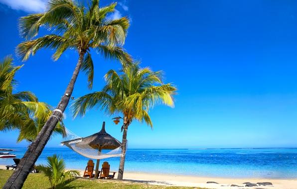 Picture sand, sea, beach, tropics, palm trees, shore, summer, sunshine, beach, sea, ocean, paradise, vacation, palms, ...