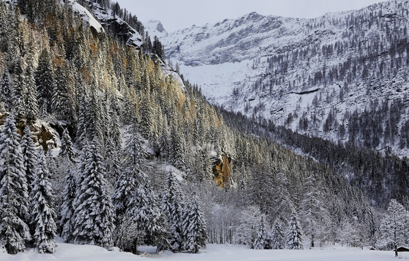 Picture winter, forest, snow, trees, mountains, house, rocks
