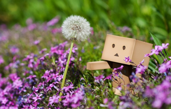 Picture grass, macro, flowers, dandelion, plants, spring, pink, danbo