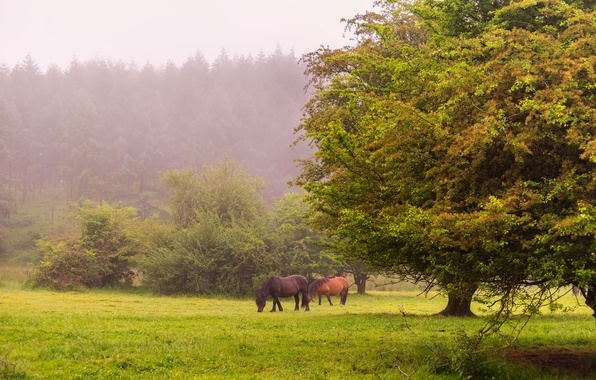 Picture forest, grass, trees, fog, glade, horse, lawn