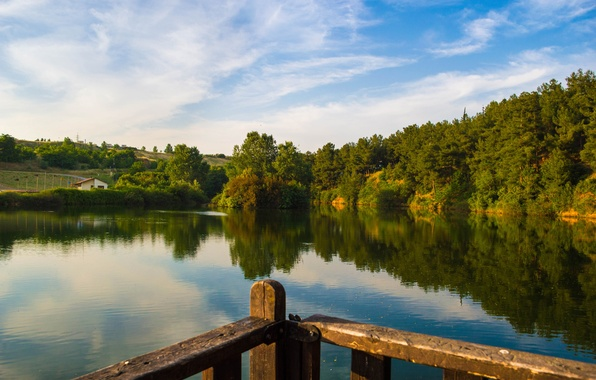 Picture forest, summer, trees, lake, shore, slope
