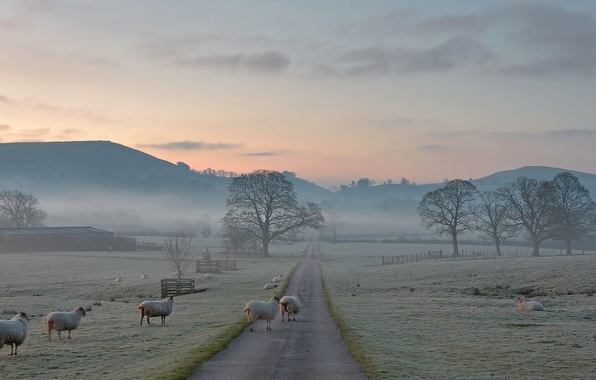 Picture frost, road, trees, mountains, nature, fog, England, morning, oyce