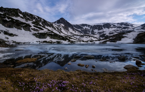 Photo wallpaper flowers, snow, Rila, mountains, Bulgaria, clouds, Rila national Park, Ribnoto lake