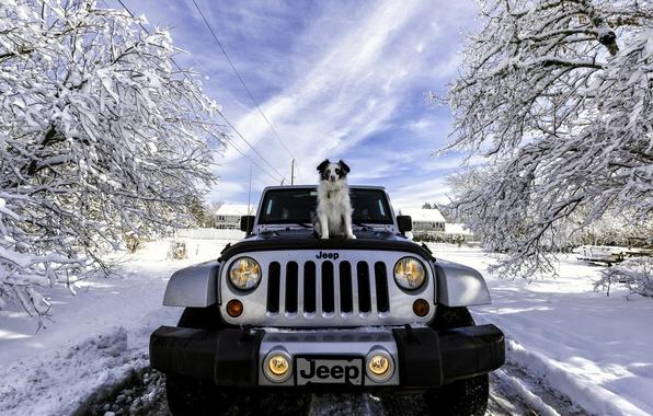 Picture winter, machine, snow, dog, Jeep, Jeep Wrangler
