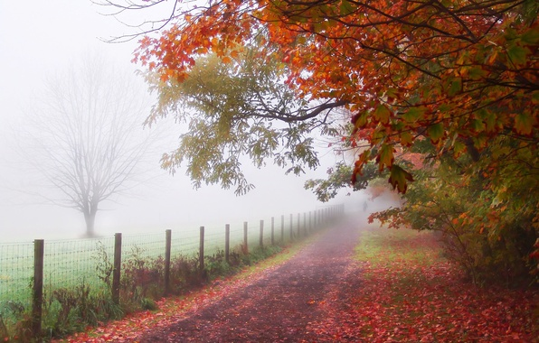 Picture leaves, trees, fog, Park, the fence, people, Autumn, track, path