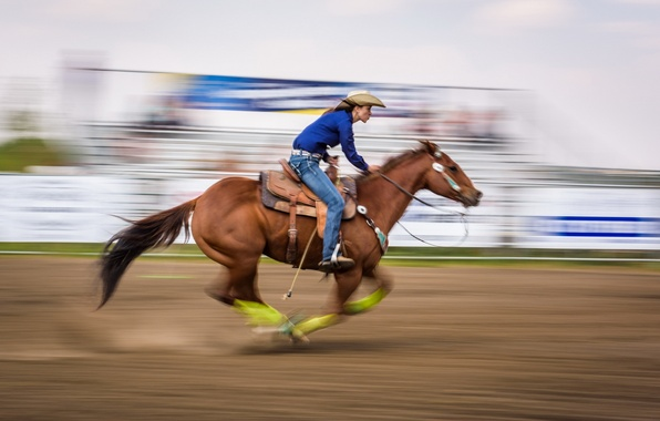 Picture horse, sport, running