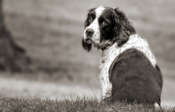 Picture sadness, look, each, dog