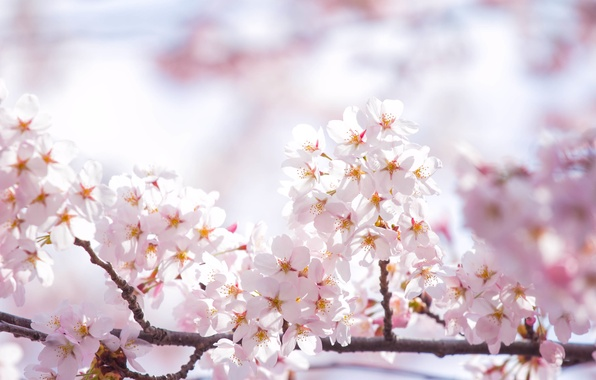 Picture the sky, the sun, light, flowers, branches, spring, petals, Sakura, pink, flowering
