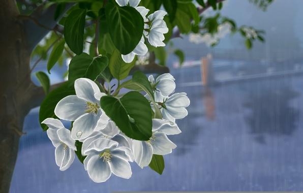 Picture leaves, drops, flowers, rain, tree, figure, branch, art, white, Apple