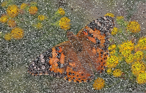 Picture macro, flowers, butterfly, bokeh, Vanessa certopoloha, the painted lady, painted lady
