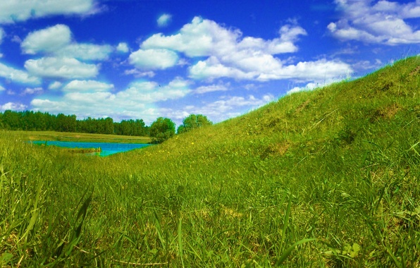 Picture The sky, Grass, Butterfly, River, Panorama, Summer, Birds