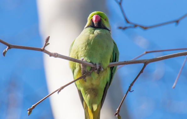 Picture the sky, bird, branch, feathers, beak, parrot