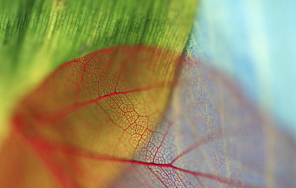Picture leaves, red, blue, green, veins, bokeh